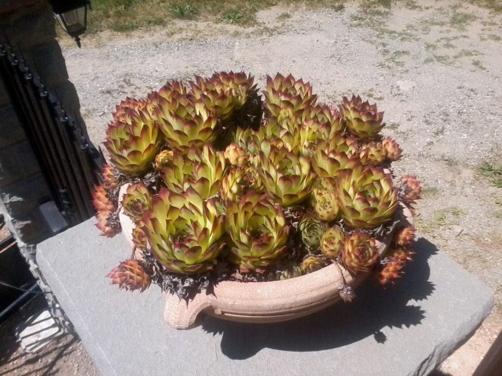 Le piante perenni da bordura e altre meraviglie in fiore for Piante da bordura perenni